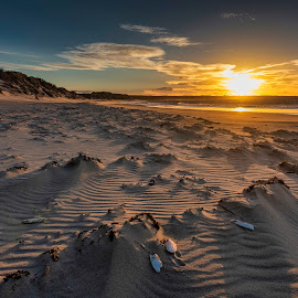 Beechford Sunset, Tasmania. by Ron Rainbow - Uncategorized All Uncategorized