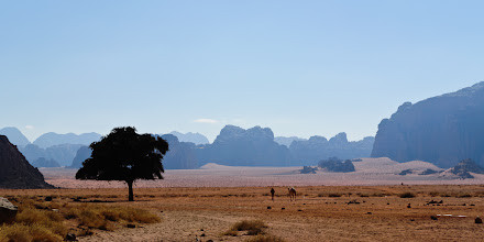 Photo: Camels on the horizon