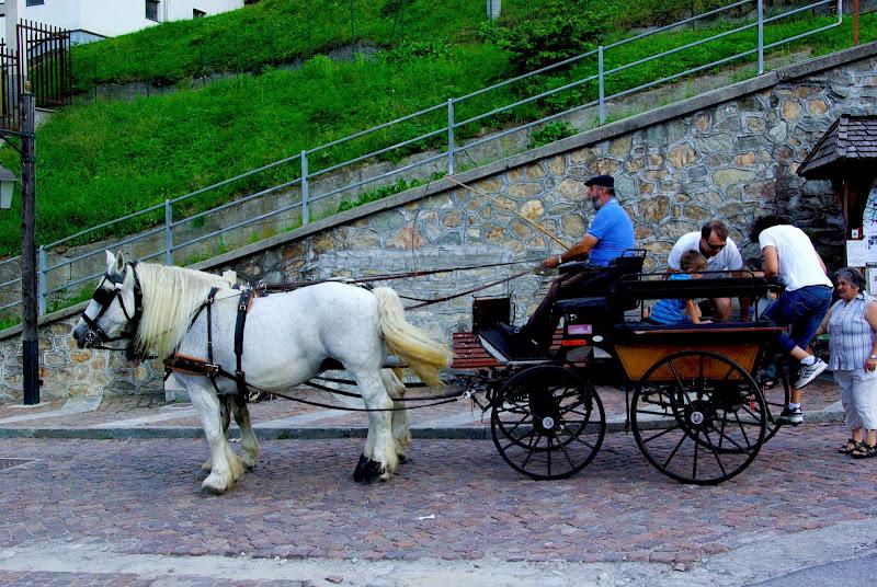 Uomo e cavallo: la carrozza di Flavia Cantini PH