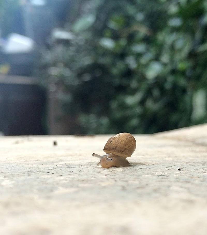 Little Snail di enricochirico