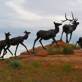 Wapiti Trail by Bart Walter by Rita Goebert - Artistic Objects Other Objects ( jackson hole; wyoming; outdoor statuary; bart walter; bronze; elk; outdoor art;, national wildlife art museum,  )