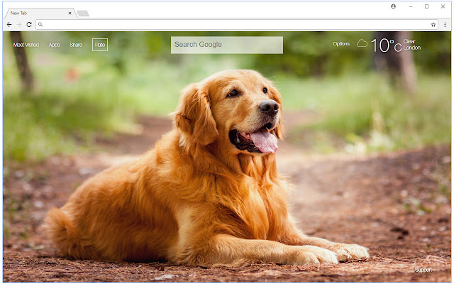 Golden Retriever HD Wallpaper New Tab Themes