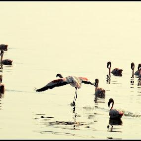 by Akshay Padhye - Animals Birds