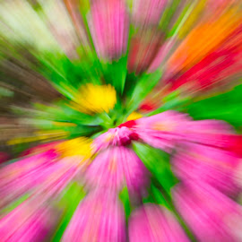 by Jim Jones - Abstract Light Painting ( art, color, abstract, colorful, flower )