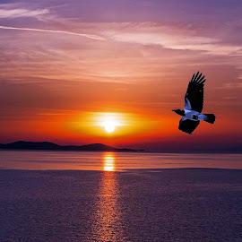 greek crow by Will McNamee - Digital Art Places ( patty_j_ball@hotmail.com; donaldbarber11@msn.com; donaldbarber11@msn.com; d3a1@aol.com;  postholes2002@yahoo.com;,  )