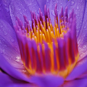 by KooKoo BreSyanatha - Nature Up Close Flowers - 2011-2013