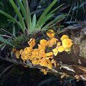 Hongo amarillo en tronco de árbol