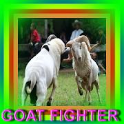 goat Fighter
