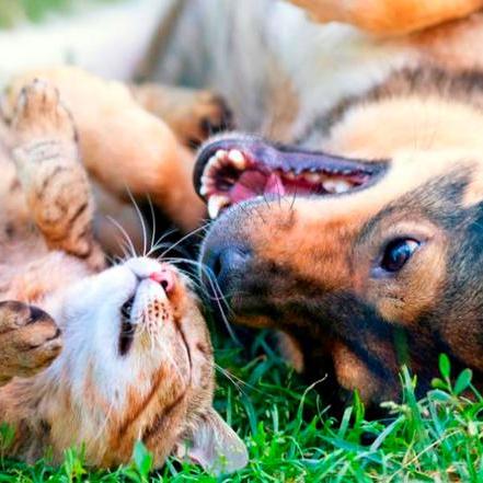 Happy Tails Petsitting Services
