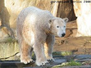 Photo: Knut unternimmt noch eine Anlageninspektion ;-)