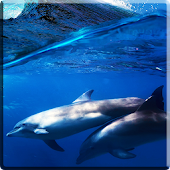 Dolphins +Sound Live Wallpaper