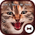 Cat Wallpaper Don\'t Touch My Phone Theme file APK Free for PC, smart TV Download