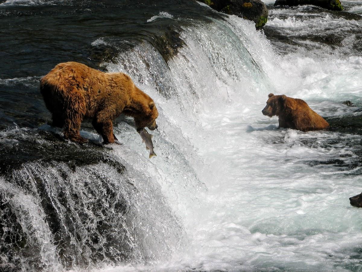 Male catching salmon