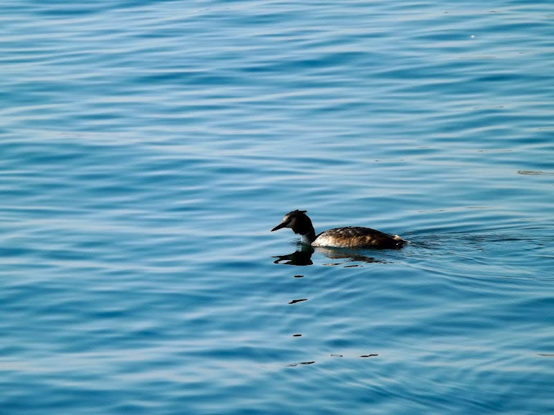Bagnante nel lago d'Iseo di SabryPr19