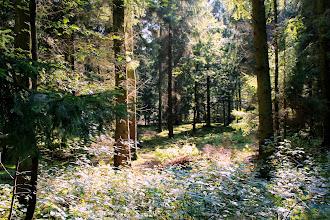 Photo: Waldweg am Großensee entlang