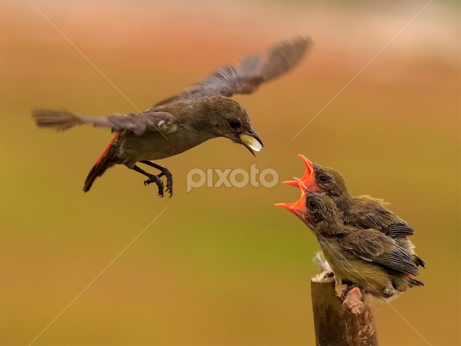 Whose turn is it ? by Husada Loy - Animals Birds