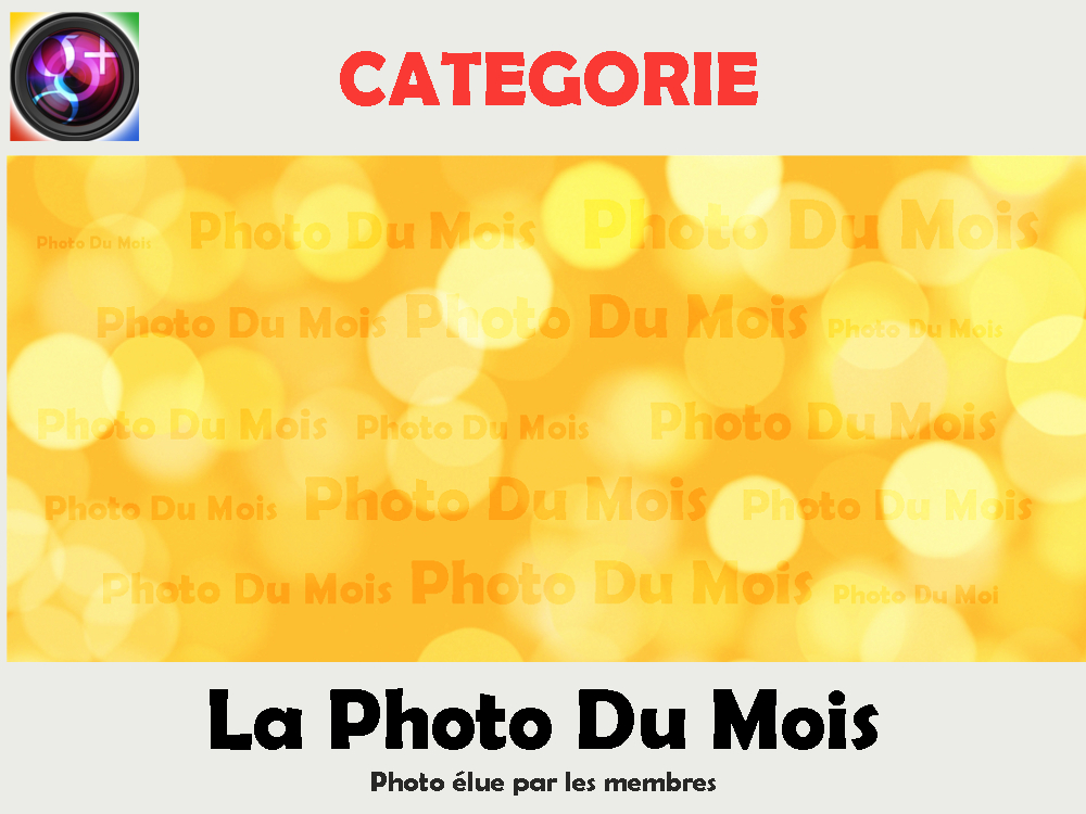 """Photo: LA PHOTO DU MOIS  Cette rubrique est réservée aux modérateurs qui y déplacent les photos élues. Merci de ne rien publier ici.  ------------------------------------------------------------------------------- RÈGLEMENT DU VOTE ------------------------------------------------------------------------------- Tous les mois, une photo est élue par les membres de la communauté.  Elle est déplacée dans la rubrique """"La Photo Du Mois"""" et mise en avant pendant 2 jours dans la communauté.  ----------------------------------------------------------------------------- Quelles photos sont en lice pour ce vote ? ------------------------------------------------------------------------------ → Toutes les photos du mois passé déposé dans la galerie Zorus pour le vote de 'L'AFFICHE HEBDO"""".  --------------------------- Qui vote ? --------------------------- --> les membres de la communauté  ------------------------------------------------------------ Quand le résultat est-il annoncé ? ------------------------------------------------------------ Les votes se font du lundi au vendredi et sont annoncés le vendredi en soirée.  Les explications en vidéo :http://youtu.be/hjK7-HGmqwg"""