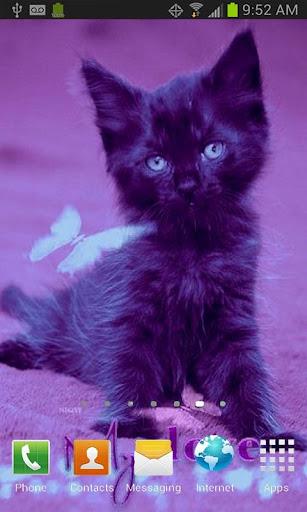 My Cat My Love LWP