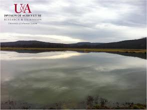 Photo: View of farm pond (1-10-12)