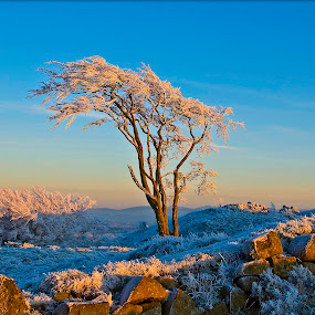 Tree in frost by Mark Denham - Landscapes Prairies, Meadows & Fields ( sky, winter, tree, cold, ice, frost )