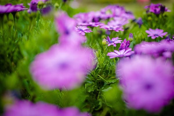 flowers di simona cancelli