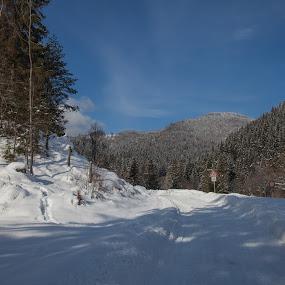 Lúčky. by Ferdinand Debnárik - Uncategorized All Uncategorized ( hill, the snow. coniferous forest, water )