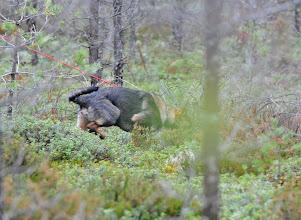 Photo: Balder finner kongen