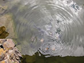Photo: Hungry carp