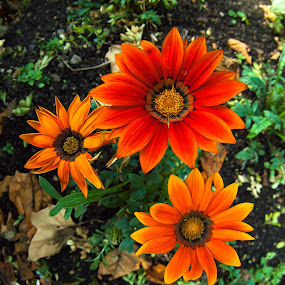 Full colour by Paschalis Angelopoulos - Nature Up Close Flowers - 2011-2013 ( orange, fisheye, red, red flower, flowers, , color, colors, landscape, portrait, object, filter forge )