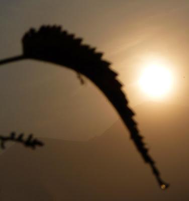 Una formica sulla foglia di Justinawind
