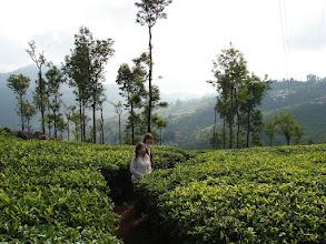 Photo: 7B220947 na plantacji herbaty