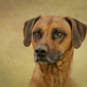 Timo by Mathias Ahrens - Animals - Dogs Portraits