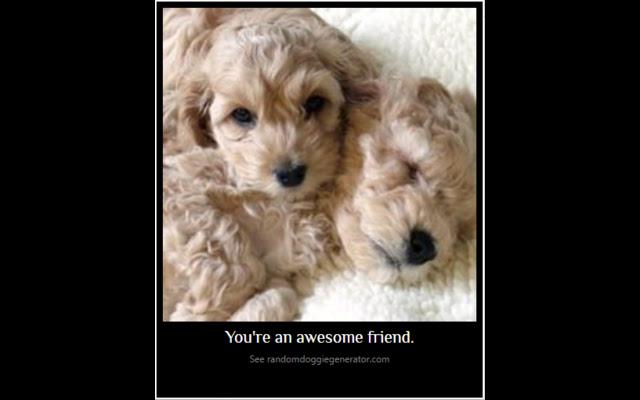 Inspiring Puppies
