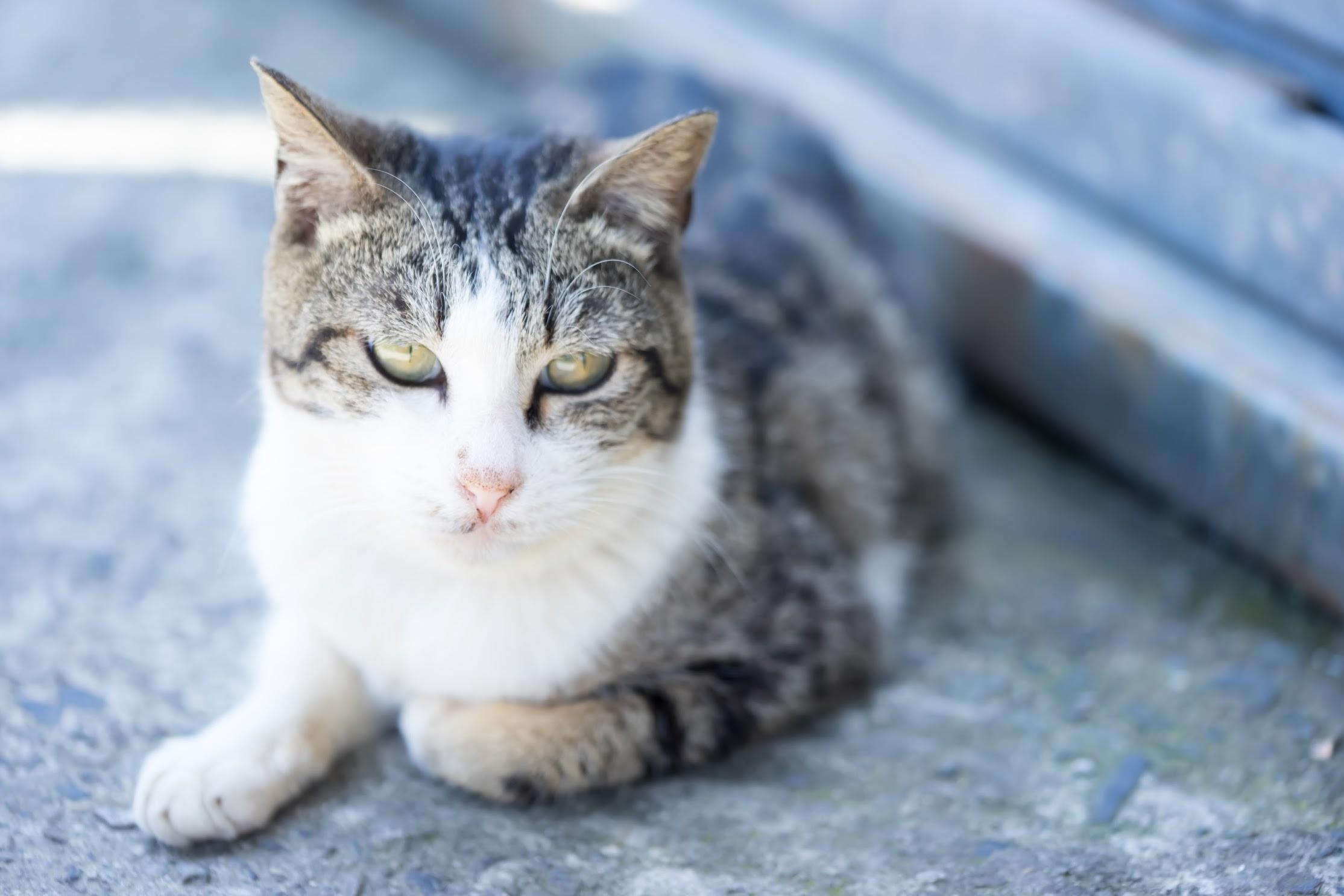 平渓線 猴硐 猫2