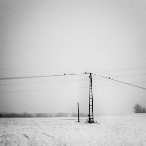 zen by Sasa Lazic - Landscapes Prairies, Meadows & Fields ( tilt-shift, high key, bw, meadow, square, birds )