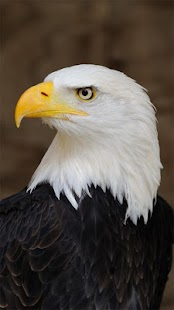 Eagle Wallpapers for PC-Windows 7,8,10 and Mac apk screenshot 3