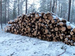 Photo: Hossa 29.11.2011. Sellua Hossan retkeilyalueelta. Kuva: Lea Vainio.