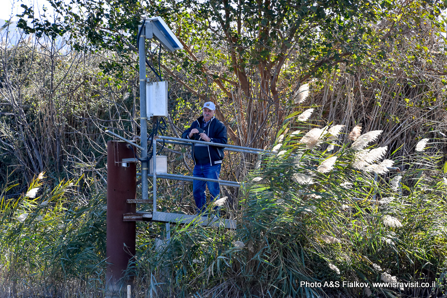 Наблюдение за птицами. Израиль. Экскурсия в птичий заповедник на озере Хула.