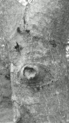 Un caso di reincarnazione in albero? di Alf