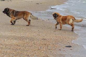 Photo: Super, une grande plage pour nous