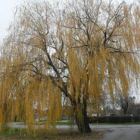 tree by Gordana Djokic - Nature Up Close Trees & Bushes ( tree, nature, bushes, sad, landscape )