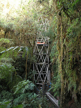 Photo: A tower that will become part of a canopy walkway at the Wayqecha Field Station.