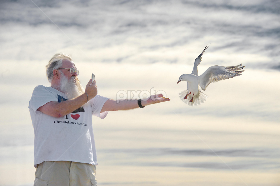 I catch it by Winkie Chau - People Street & Candids ( seagull, feeding, candid, oldman, self portrait, , photographers, taking a photo, photographing, photographers taking a photo, snapping a shot )