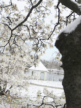 Photo: Magnolias and gazebo under snow at Cox Arboretum in Dayton, Ohio.