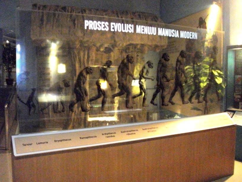 Rangkaian evolusi Homo erectus (kita tidak termasuk rangkaian ini, dong)