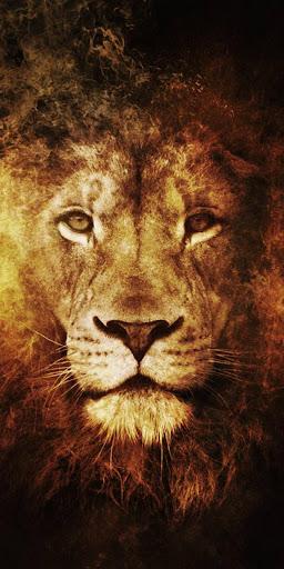 lion king wallpapers - best lion wallpapers hd screenshot 1