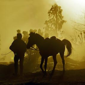 horseman siluet by William  de Jesus Tavares - People Fine Art