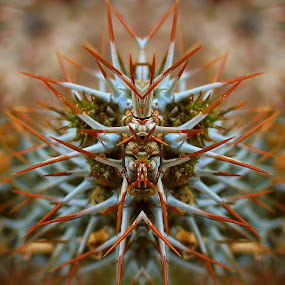 Prickly Creature by Zdenka Rosecka - Abstract Patterns (  )
