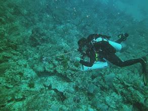 Photo: Ivan_lionfish_hunting_Tanka_reef
