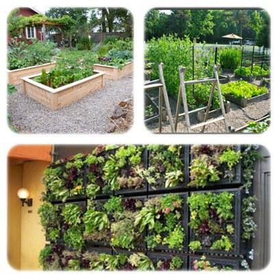 Vegetable Garden Ideas Android Apps on Google Play